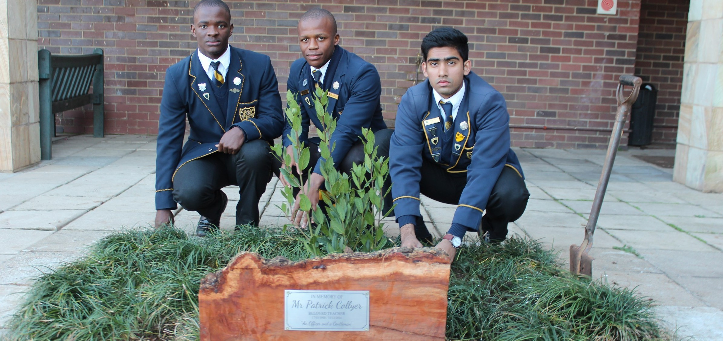 Tree Planted for Mr Collyer